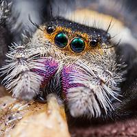 Arachnids - Spiders