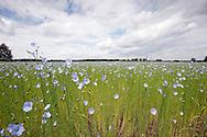 Field of flowers at Battle of Waterloo 200th reenactment, Belgium (Saturday 20 June 2015) © Rudolf Abraham