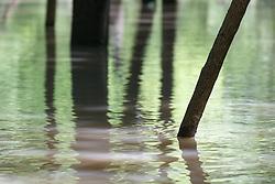 Submerged forest after Trinity River flood, Texas Buckeye Trail, William Blair Park, Great Trinity Forest, Dallas, Texas, USA
