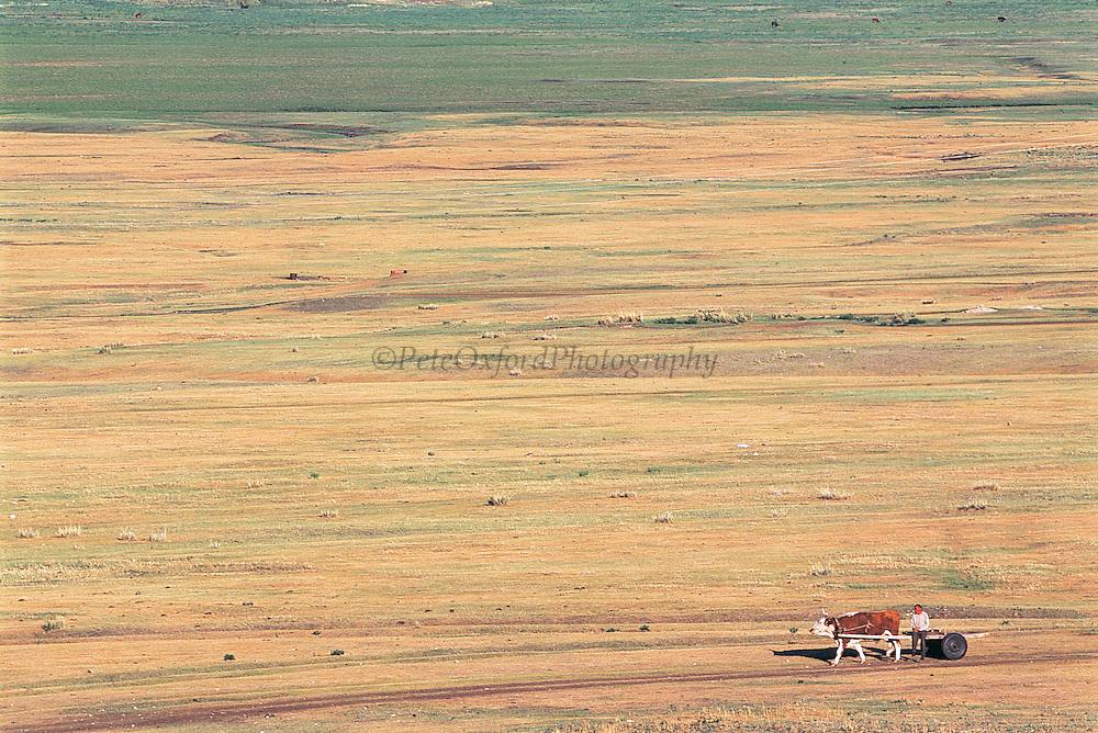 Riding ox cart<br /> near Erdenet<br /> Northern Mongolia