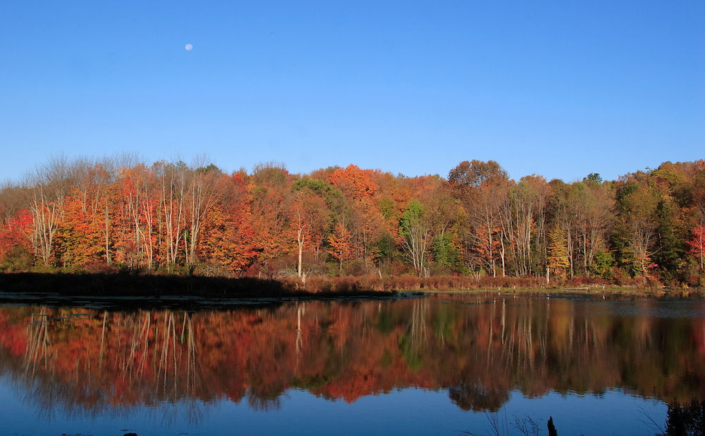 Mount Hope, N.Y. - Trees and their colorful leaves are reflected in a pond on Oct. 8, 2006. The moon is visible above the trees. ©Tom Bushey