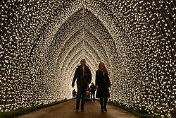 Edinburgh, Scotland, UK. 23 November, 2018. Christmas at the Botanics opens at the Royal Botanic Garden Edinburgh. The annual night event features an illuminated trail through the gardens with over a million lights. Pictured, Cathedral of Light, designed by Mandy Lights. This long cathedral-window-like structure showcases over 100,000 individual flower bud LED lights.