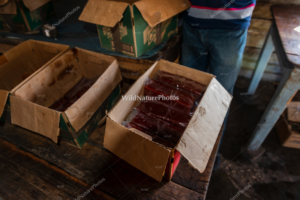 Wrapped guava bars are placed in boxes for storage and shipping at La Panchita. Florida, Cuba.