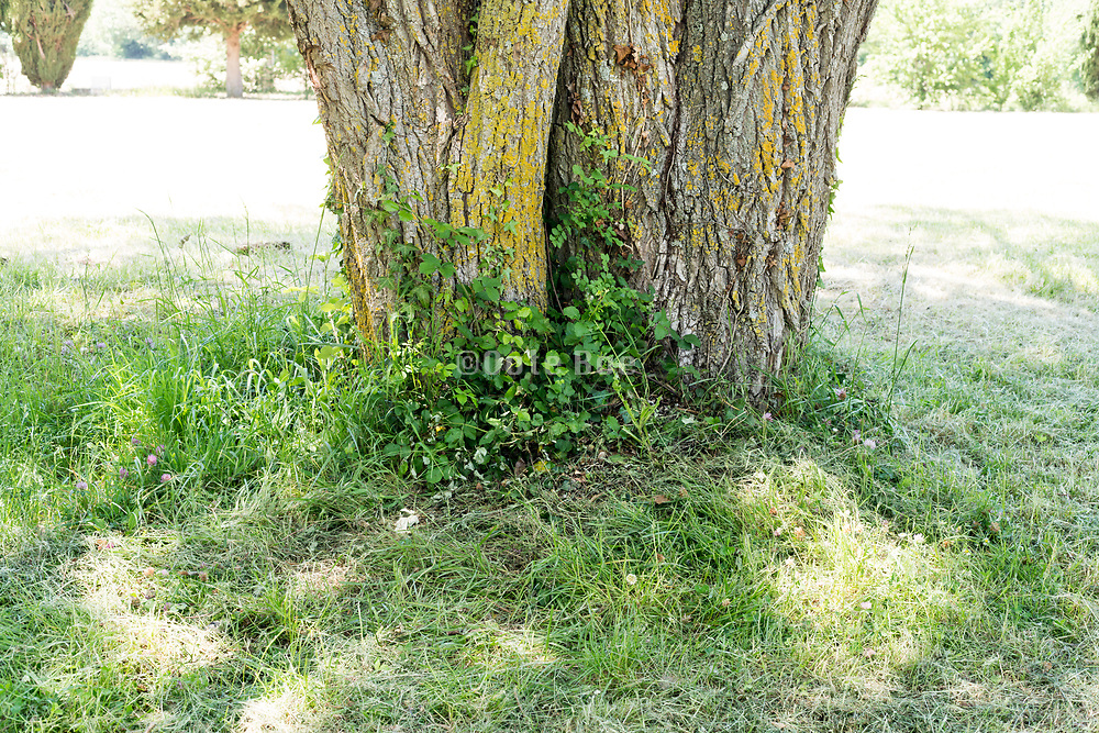 fresh green weed growing by a tree trunk