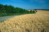 Arable Farmland, Southern England
