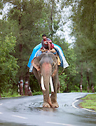 A mahout, an elephant driver, drives his elephant near Goa, India