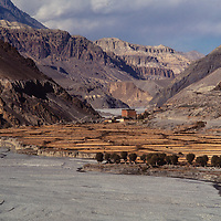 Barley fields grow around Kagbeni Village in the Kali Gandak Valley, Nepal. Mustang stretches into the background.