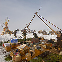 After a day of sledding north of the Arctic Circle in Russia, a nomadic group of Komi reindeer herders assembles its chums (tepees) around their pre-placed belongings.  By the time the chums are erected, fires will be going in the stoves and tea almost ready.