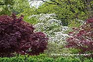65021-03619 Japanese Garden in spring,  Missouri Botanical Garden, St Louis, MO