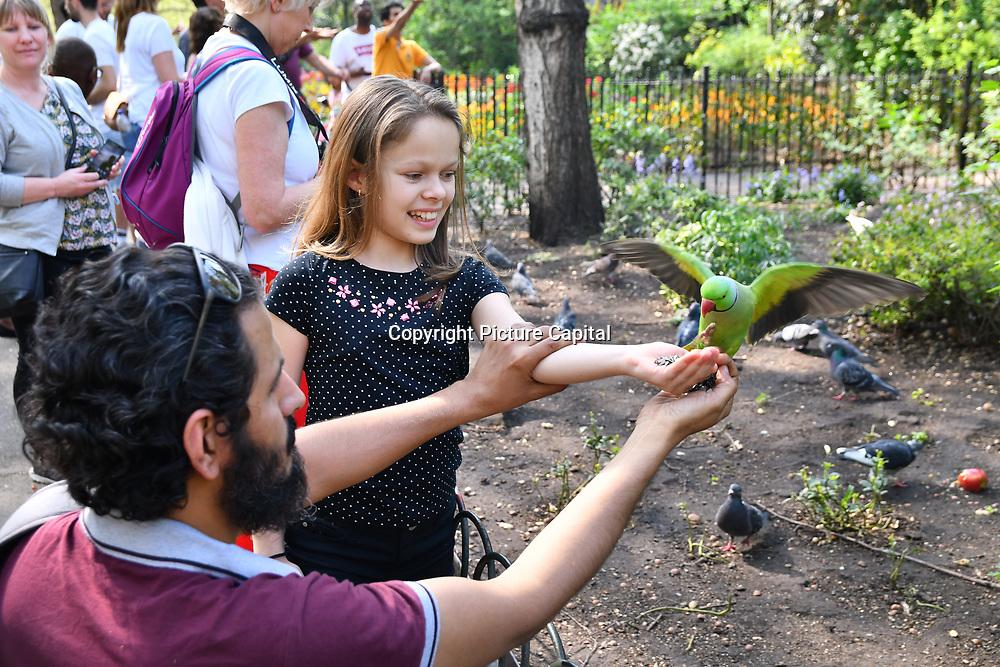 Tourists sunbath,feeding birds, and eating ice-cream at the Royal park London on 22 April 2019.