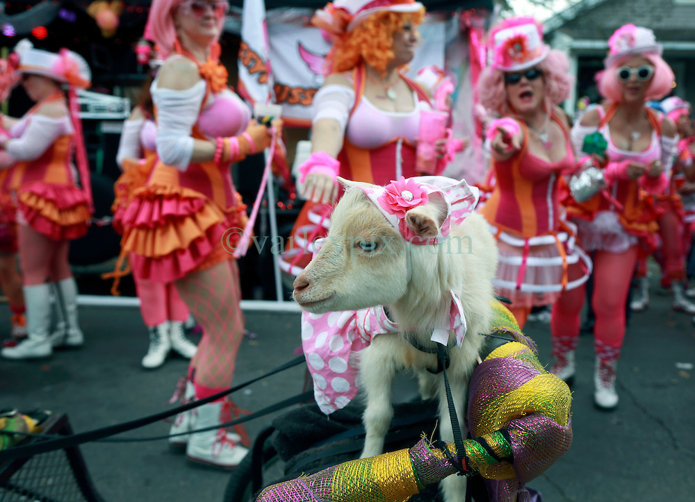02 March 2014. New Orleans, Louisiana.<br /> Mardi Gras. A goat passes by the lovely ladies of the Pussyfooters at the Krewe of Thoth parade in Uptown New Orleans.<br /> Photo; Charlie Varley/varleypix.com