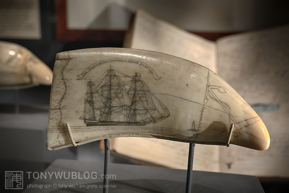 """Sperm whale tooth scrimshaw on display at the Nantucket Whaling Museum, with the inscription """"The Susan on her homeward bound passage."""" This tooth is one of a well-known series of at least 35 engraved sperm-whale teeth known as Susan's Teeth, engraved by Frederick Myer. Frederick is the earliest known American scrimshaw artist to sign and date his work. This tooth is dated 22 August 1829. Behind this tooth is the Journal of the Whaleship Susan kept by Captain Reuben Russel from 12 December 1841 to 28 May 1846."""