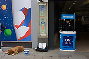 Oxford Street information point and resting RSPCA dog. The animal is spread across the pavement while its charity minder hopes for donations in the bucket provided and alongside the dog. Along the street we see  a depressed-looking street information helper who should be offering advice to shoppers and visitors to Oxford Street in central London, UK. It is a scene of misery and dejection, of depression and disinterest