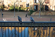 Two pigeons watch a jogger run past. London, UK.