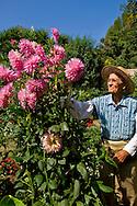 Elderly man working outdoors as volunteer gardner at South Coast Botanic Garden, Palos Verdes Peninsula, California