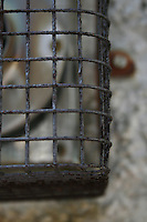 Rusty wire vent cover
