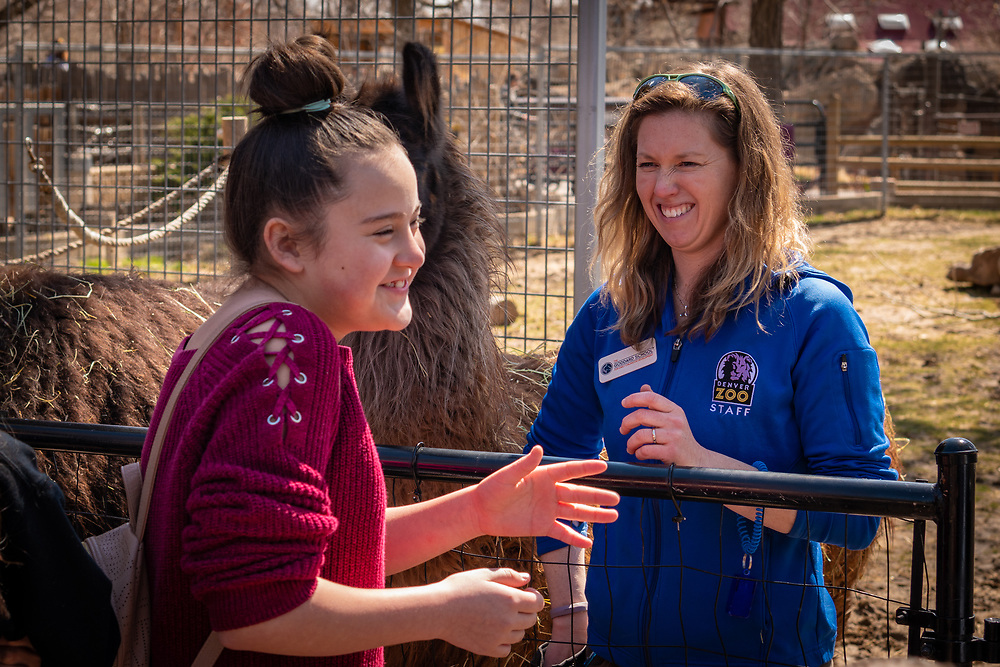 The Meet The Llamas demonstration lets visitors feed them from their hands.