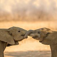 Mammals in colour