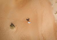 Aerial view of a single goat on desert landscape, Abu Dhabi, U.A.E