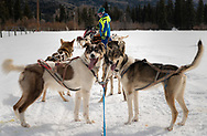 Mountain Paws offers dog sledding in Colorado's Blanco Basin, a beautiful scenic area near the New Mexico border. All images © Thomas Graves