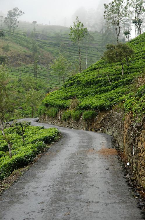 Road leading to Lipton's seat, Southern Highlands, Sri Lanka