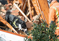 © Licensed to London News Pictures. 05/02/2014. Clacton. UK. Rescue dogs search the rubble.  Shortly before 8.30am today 5th February 2014 an explosion occurred at a property in Cloes Lane, Clacton. Emergency services are on scene with National Grid workers to make safe the scene and investigate the cause of the explosion.. Photo credit : ECFRS/LNP
