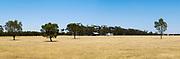 Dry pasture paddock landscape in rural Victoria, Australia. <br /> <br /> Editions:- Open Edition Print / Stock Image