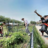"""Nederland, Rotterdam , 22 juni 2010..Proefpark de Punt in de Puntstraat..Collectieve  groententuin in het project """"Van Grond tot Mond""""..Collective vegetable garden in the project """"From Land to Mouth"""" in Rotterdam."""