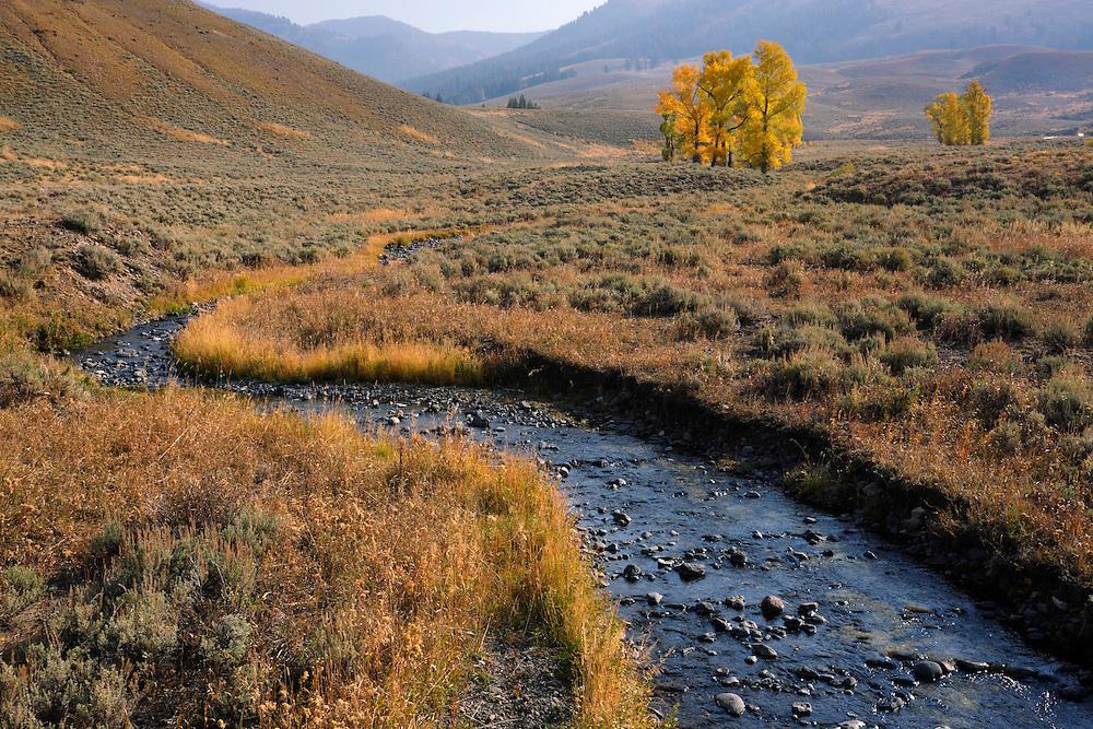 Lamar Valley, Yellowstone NP, Wyoming (Estados Unidos)
