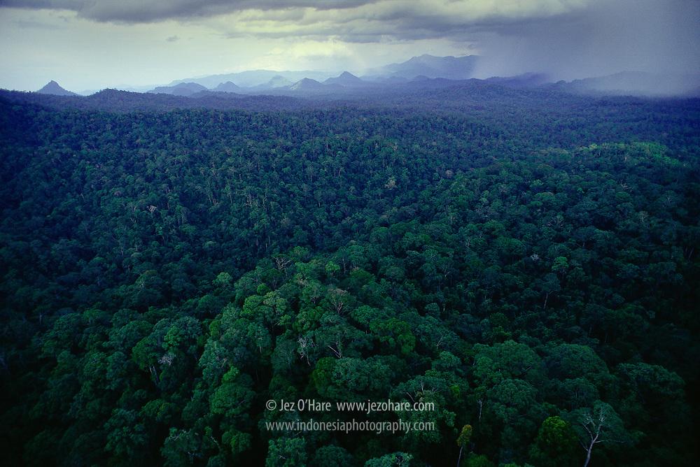 Rainforest, East Kalimantan, Indonesia.
