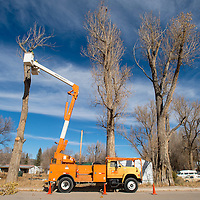 111083     Brian Leddy<br /> Workers from the New Mexico Department of Transportation trim a tree on Highway 53 Friday. The city is discussing the idea of incorporation, which would give area residents municipal water, fire and police services.