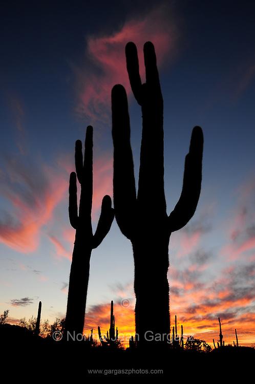 Ironwood Forest National Monument at sunset near Marana, Arizona, US, in the Sonoran Desert.