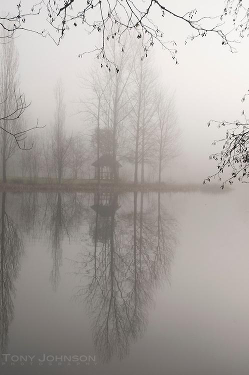 Pond, Trees and Gazebo in Fog, Battle Point Park, Bainbridge Island