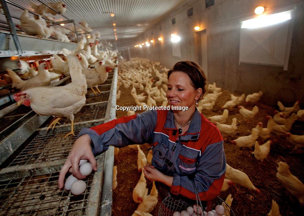 26032009, Totenvika. HØNEMOR: Anne Lene Helgestad plukker de eggene som det automatiske sorteringssystemet ikke har klart å fange opp. ..Foto: Daniel Sannum Lauten/VG