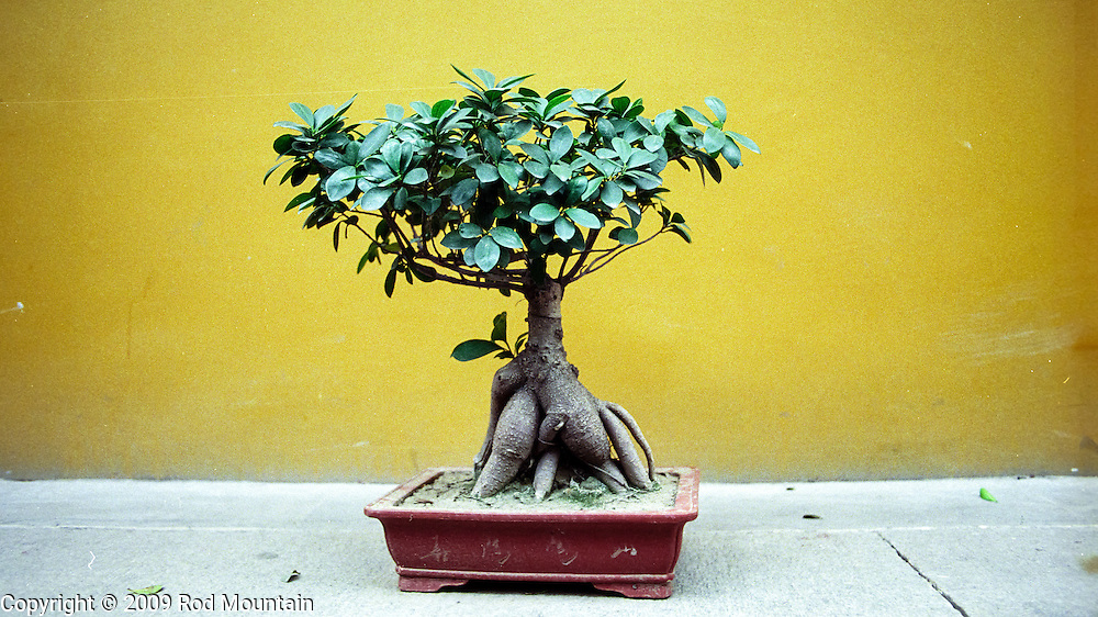 A potted plant sits alongside a yellow wall inside a Bhuddist Temple in China.