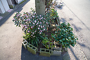 public space roadside miniature garden Japan