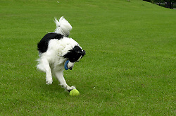 Eddie Sander with his Dogs Jackson and Inka<br /> <br /> 18 June 2004<br /> <br /> Copyright Paul David Drabble<br /> <br /> [#Beginning of Shooting Data Section]<br /> Nikon D1 <br /> <br /> Focal Length: 50mm<br /> <br /> Optimize Image: <br /> <br /> Color Mode: <br /> <br /> Noise Reduction: <br /> <br /> 2004/06/18 09:52:44.4<br /> <br /> Exposure Mode: Manual<br /> <br /> White Balance: Auto<br /> <br /> Tone Comp: Normal<br /> <br /> JPEG (8-bit) Fine<br /> <br /> Metering Mode: Center-Weighted<br /> <br /> AF Mode: AF-C<br /> <br /> Hue Adjustment: <br /> <br /> Image Size:  2000 x 1312<br /> <br /> 1/250 sec - F/6.3<br /> <br /> Flash Sync Mode: Not Attached<br /> <br /> Saturation: <br /> <br /> Color<br /> <br /> Exposure Comp.: 0 EV<br /> <br /> Sharpening: Normal<br /> <br /> Lens: 50mm F/1.8<br /> <br /> Sensitivity: ISO 200<br /> <br /> Image Comment: <br /> <br /> [#End of Shooting Data Section]