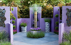 Small courtyard garden with purple painted walls. Metal containers planted with lavender and pansies. Yucca rostrata as central feature. Reflections Garden. Designer: David Domoney - Chelsea 2005