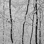 Appalachian Trail, Dalton, MA