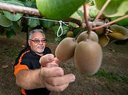 Hineora Orchard, Te Kaha 15B Ahuwhenua Trust