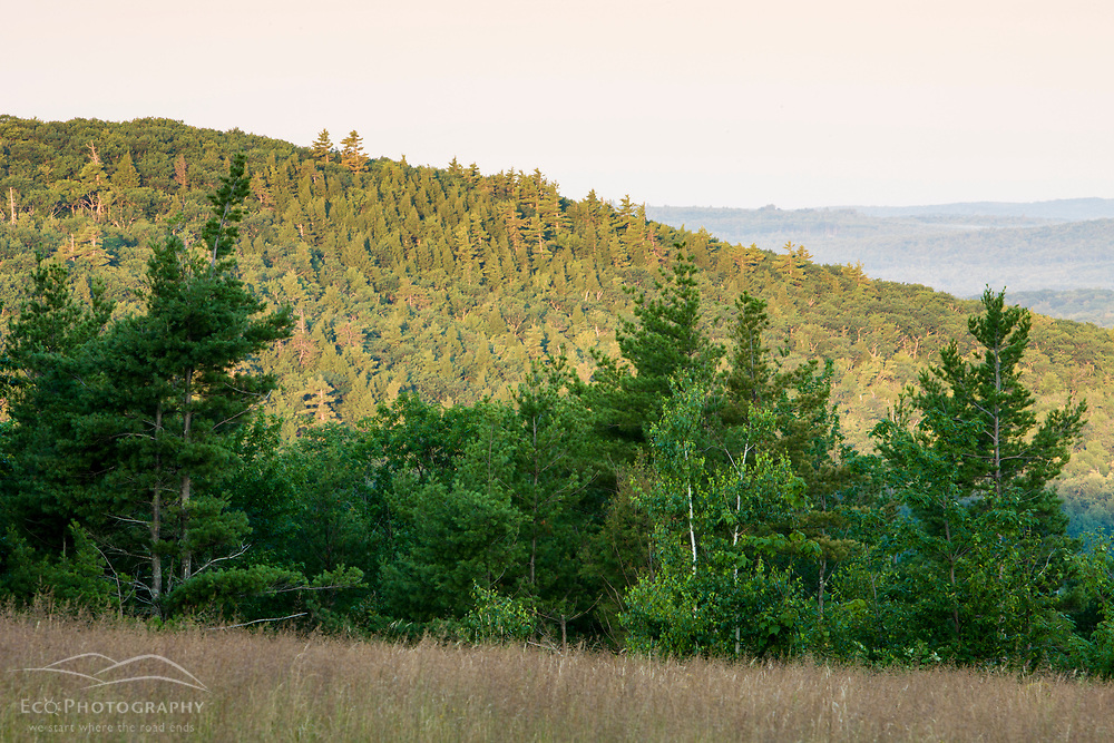 The view of Mount Eleanor from a field on Birch Hill in New Durham, New Hampshire.