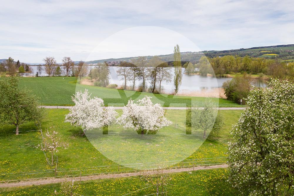 SCHWEIZ - BALDEGG - Hochstamm-Obstbäume am Baldeggersee - 25. April 2019 © Raphael Hünerfauth - https://www.huenerfauth.ch