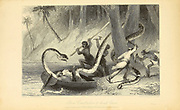 Boa Constrictor And Boat's Crew From the book ' The Oriental annual, or, Scenes in India ' by the Rev. Hobart Caunter Published by Edward Bull, London 1835 engravings from drawings by William Daniell