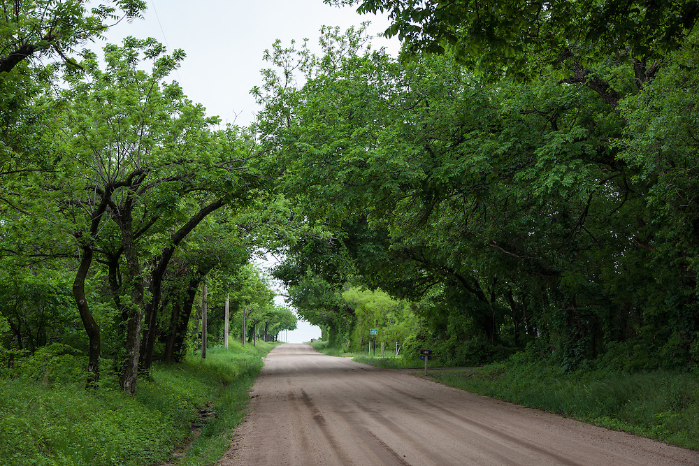 Hedge rows create a tunnel over 95th Street South near Wichita.