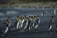 Gold Harbor<br />South Georgia<br />United Kingdom Overseas Territory<br />A Subantarctic Island in the Southern Ocean