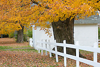 White fence and golden maple trees in autumn Vermont USA