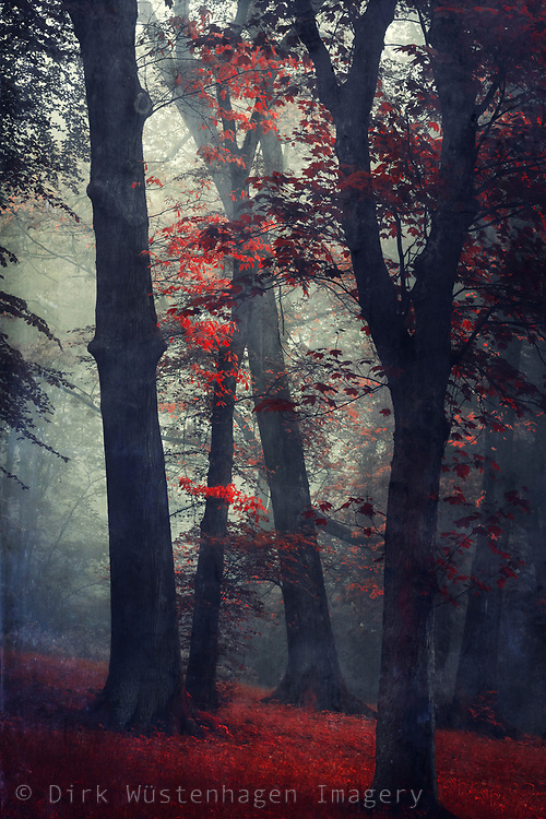Surreal forest scenery on a misty Spring morning - manipulated photograph