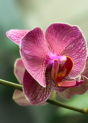 Orchid Beauty - The Wonderful Composition, Curves and Beauty of the Orchid