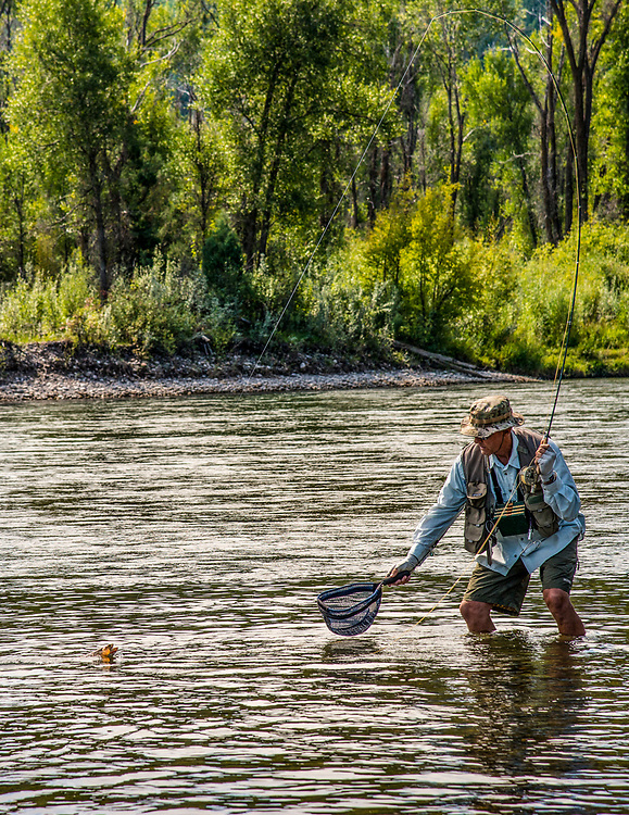 Steve just about to bag a beautiful golden trout on the South Fork of the Snake River in Eastern Idaho. Licensing and Open Edition Prints MR