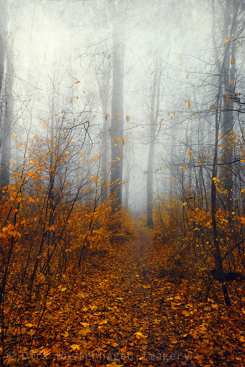 fall forest in mist with bright yellow orange leaves on trees
